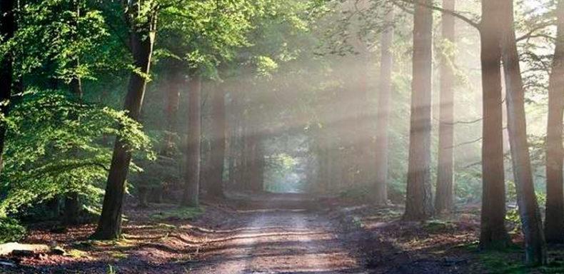 bosque-soledad-cenizas